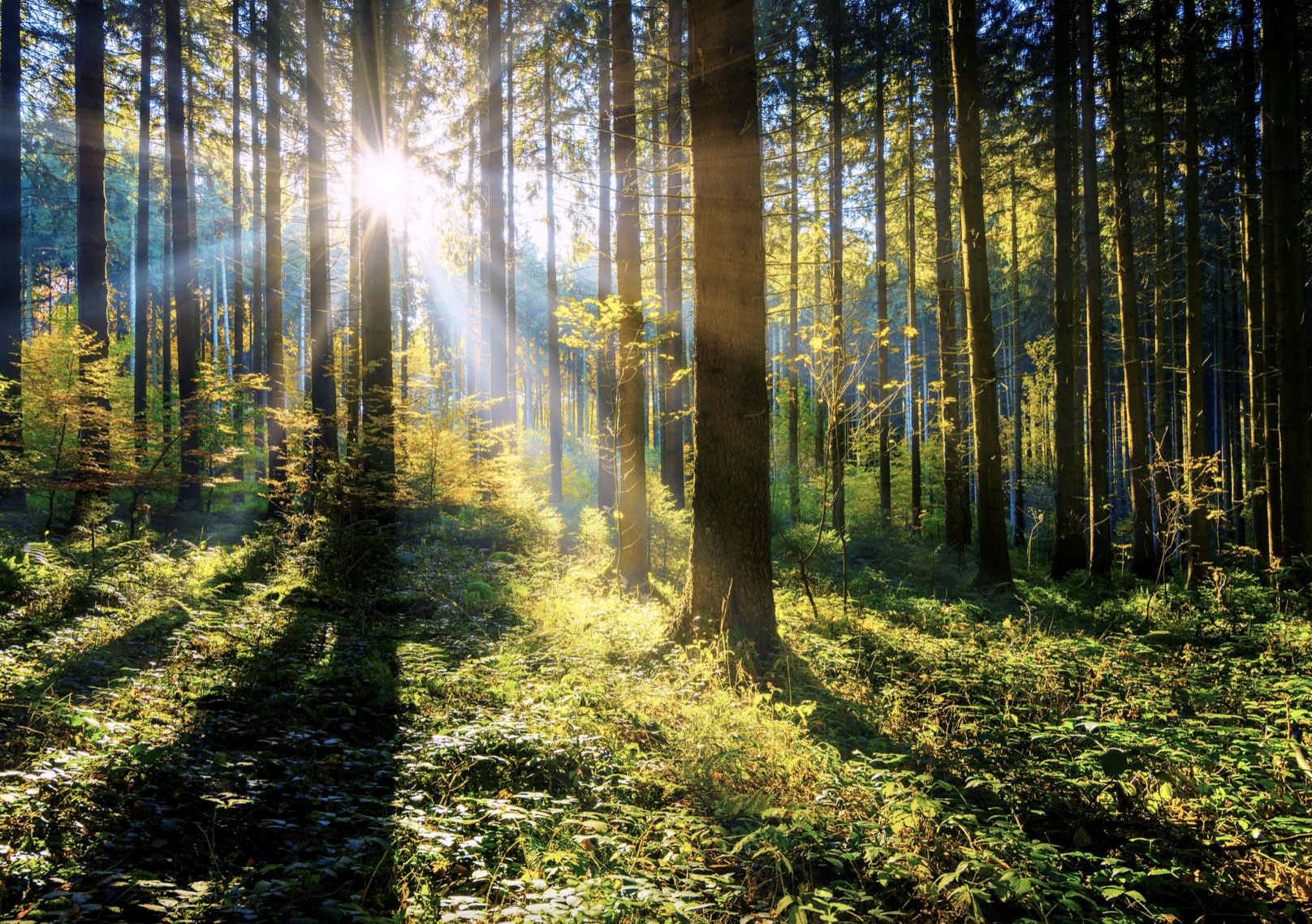 Image of trees in a forest